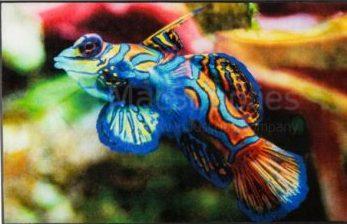 logo fish